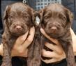 Nora pups 1