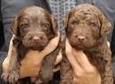 Nora pups 2