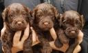 Nora pups 3
