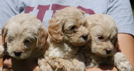 Stella Puppies 3